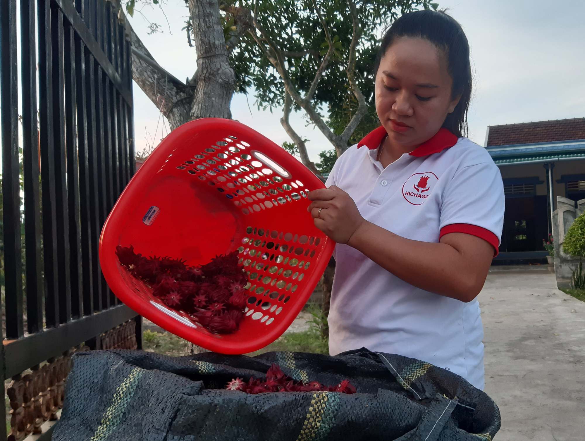 Nguyen Thi Thu Hien selects red artichoke flowers at her processing facility Hichagol, based in Phong An Commune in Phong Dien District, located in Thua Thien-Hue Province in north-central Vietnam. Photo: Duc Tai / Tuoi Tre