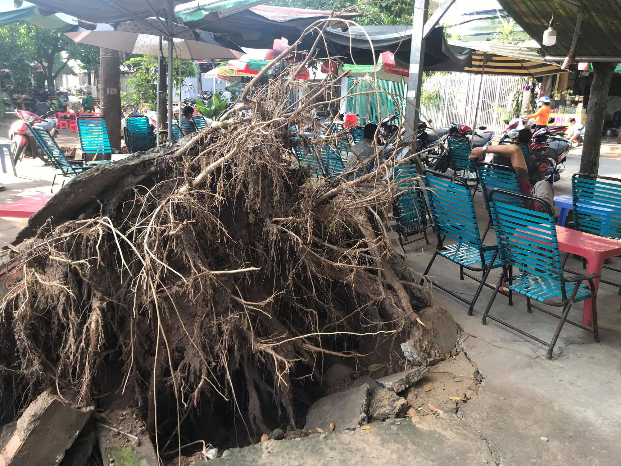 A tree, uprooted due to heavy rain, in seen in this photo taken in Go Vap District, Ho Chi Minh City. Photo: Le Phan / Tuoi Tre