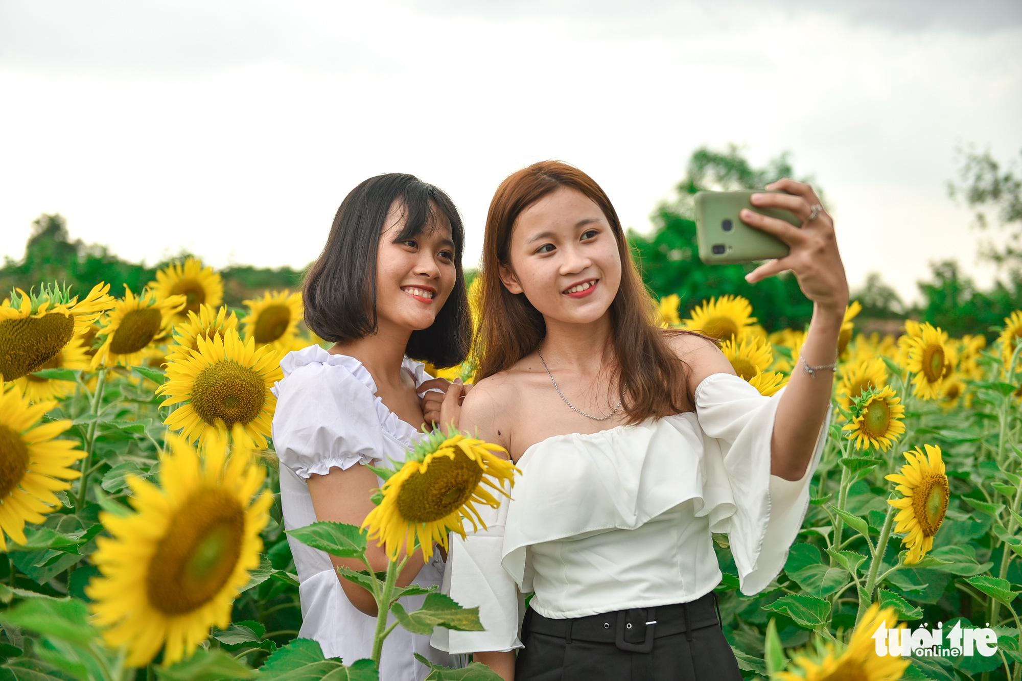 Dazzling sunflower garden draws photo seekers on Saigon outskirts
