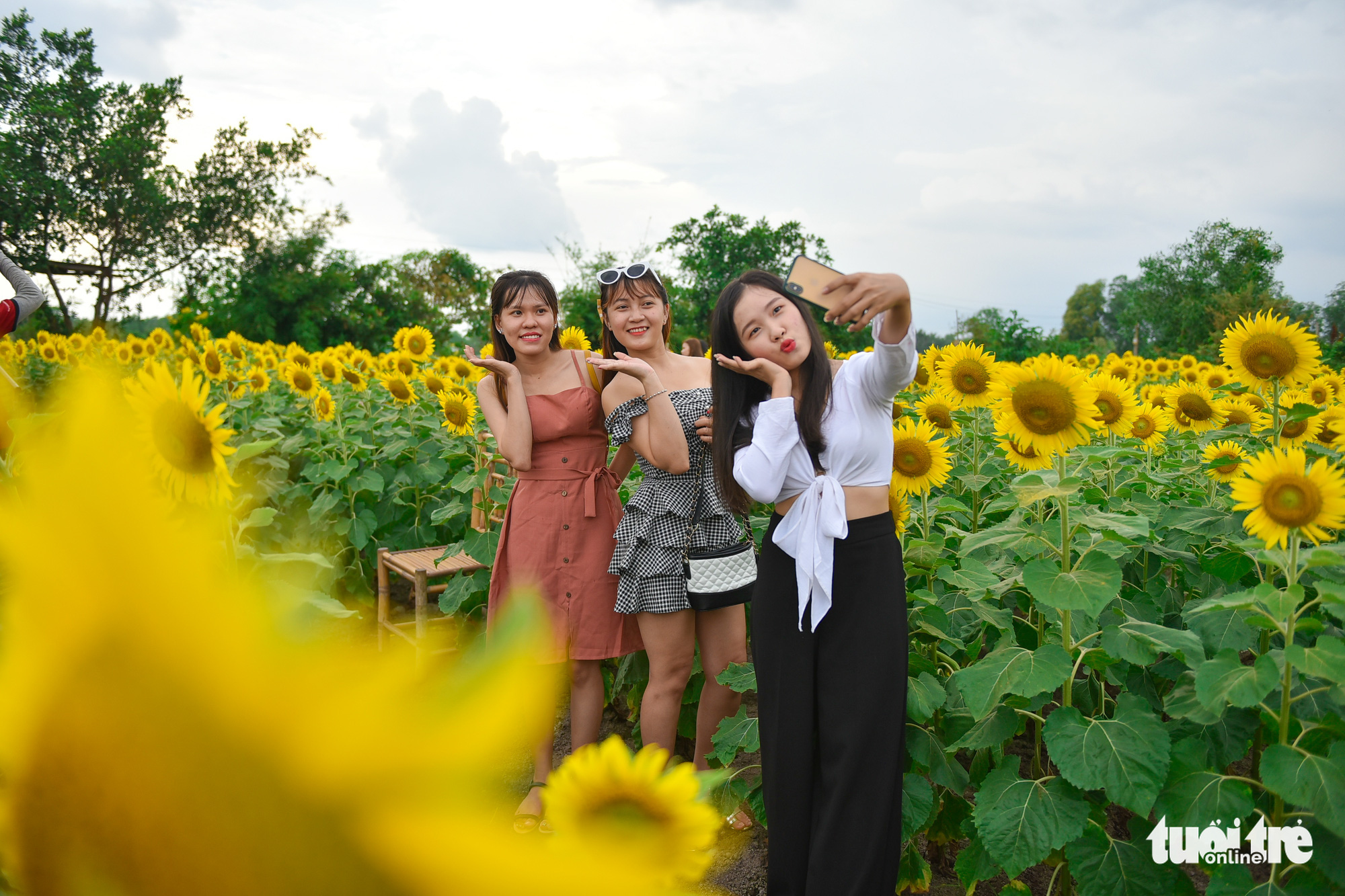 Three friends take a 'wefie' at a sunflower garden located in District 9, Ho Chi Minh City, Vietnam. Photo: Ngoc Phuong / Tuoi Tre