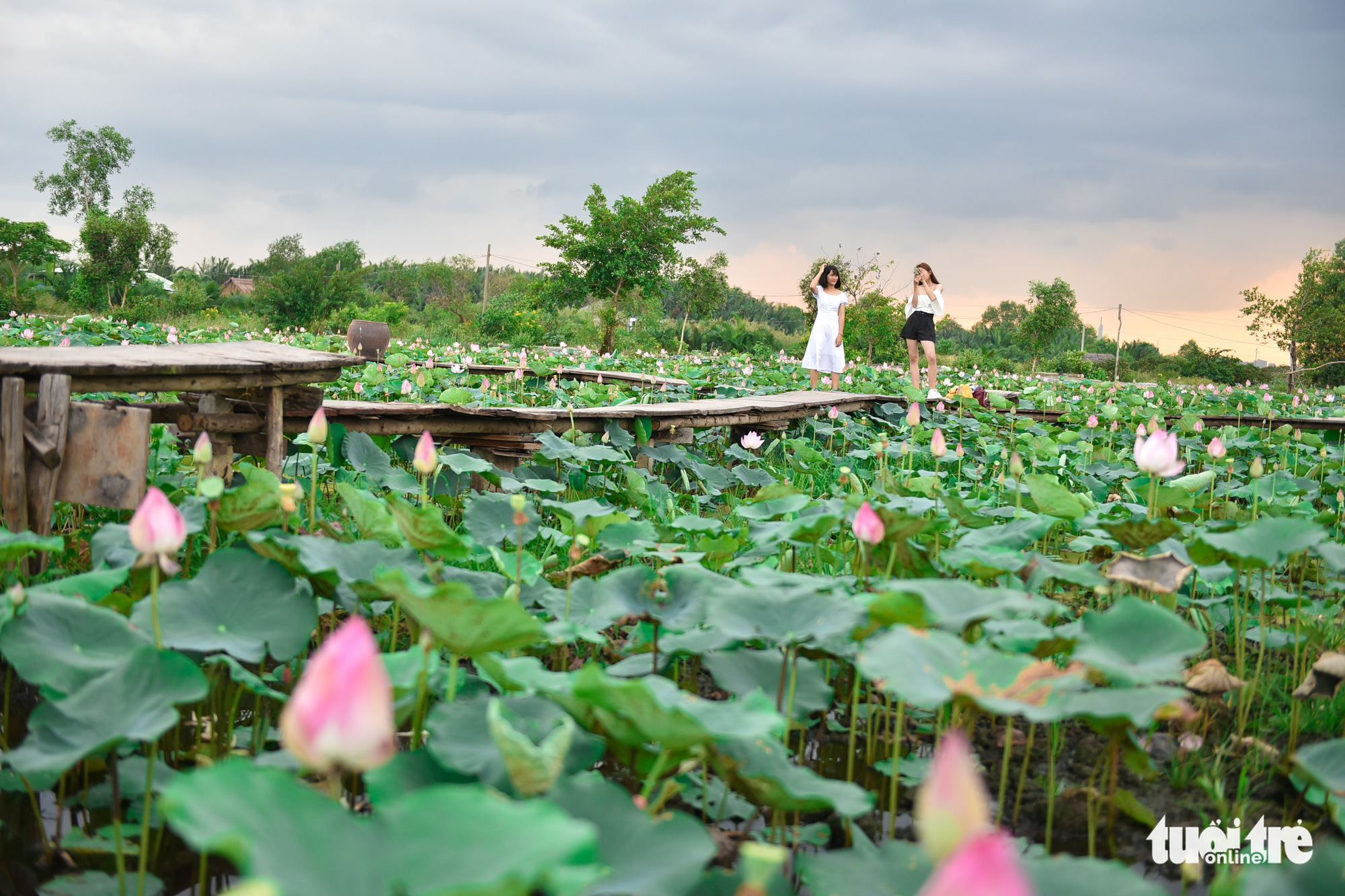 A woman pose among lotus flowers as her friend takes photos of her at a garden located in District 9, Ho Chi Minh City, Vietnam. Photo: Ngoc Phuong / Tuoi Tre
