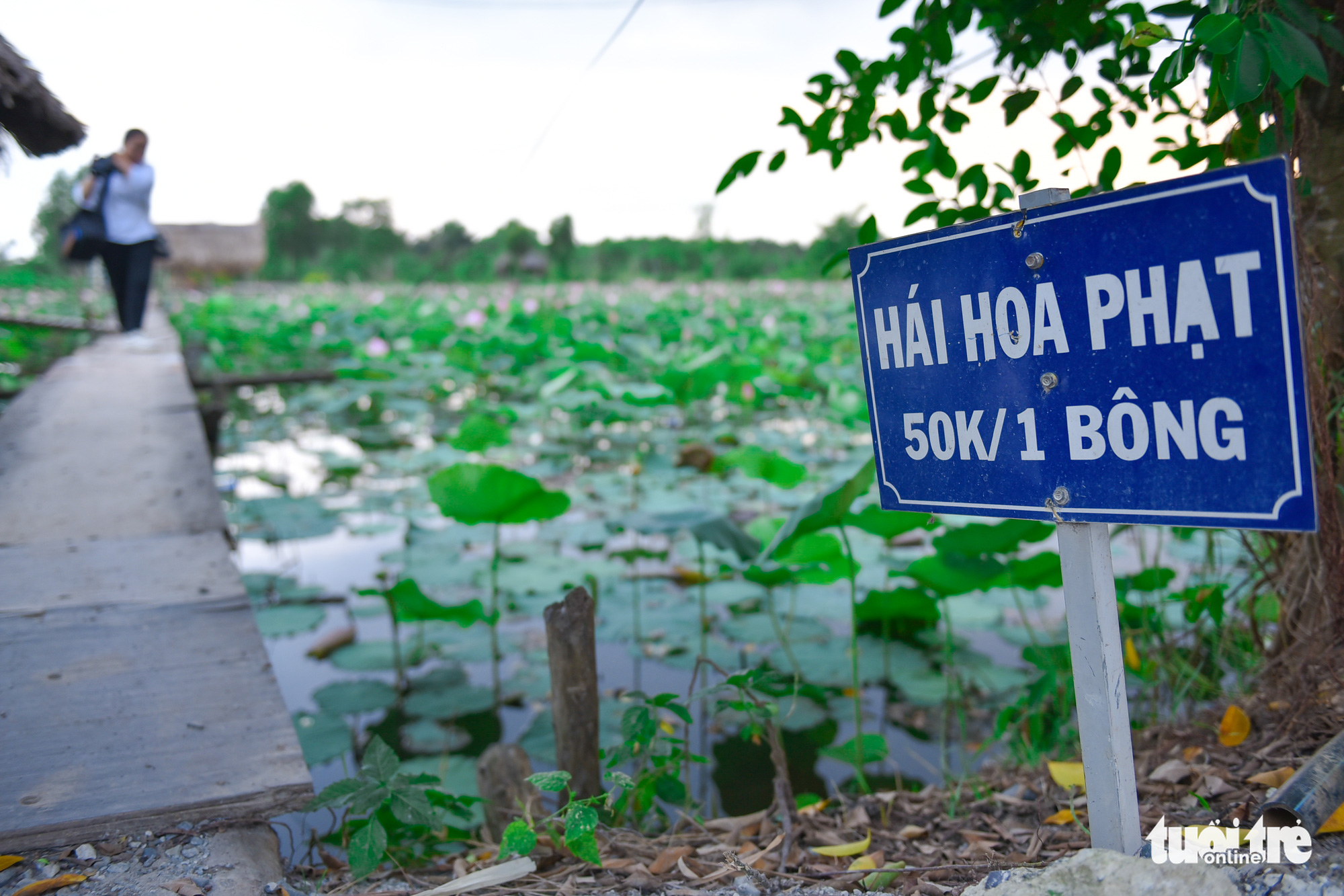 A sign warning visitors that those found picking flowers must pay VND50,000 per flower picked is seen at a garden located in District 9, Ho Chi Minh City, Vietnam. Photo: Ngoc Phuong / Tuoi Tre