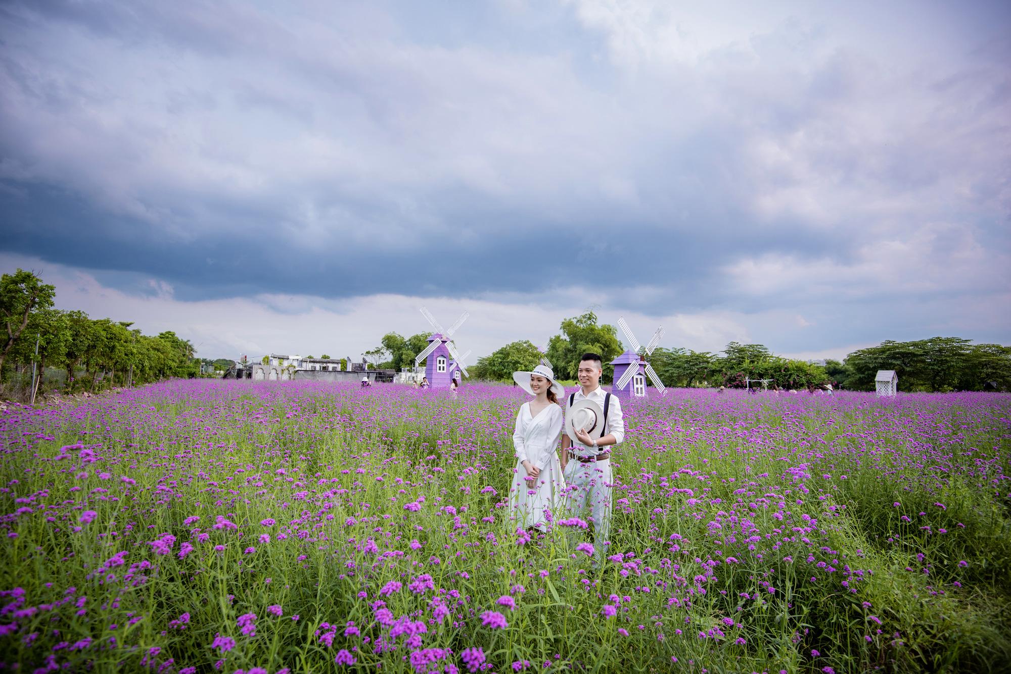 People visit a purpletop farm at the Long Bien flower plateau in Hanoi, Vietnam. Photo: Pham Tuan / Tuoi Tre