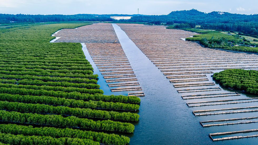 Ca Cai Lake mangrove forest in Quang Ngai Province, central Vietnam is seen in an aerial photo. Photo: Nguyen Duy Sinh