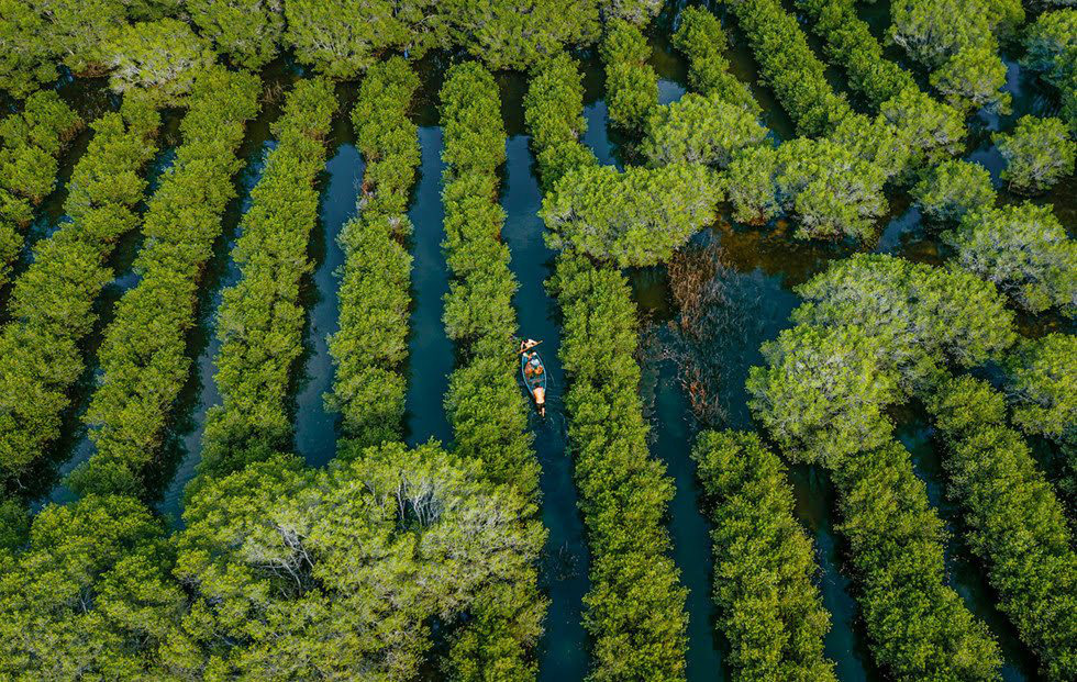 Mangrove forests reveal magnificent beauty in central Vietnam