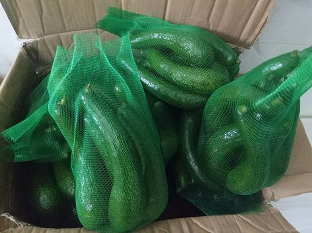 A file photo shows 034 avocados being prepared for delivery to customers by a retailer in Ho Chi Minh City's Thu Duc District. Photo: Ha Nguyen/ Tuoi Tre News