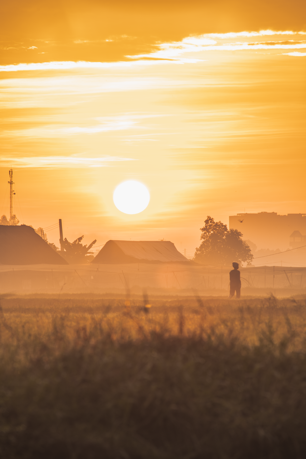 Morning lights dye things with a golden color on a field in Ho Chi Minh City's Hoc Mon District. Photo: Vo Hung Manh