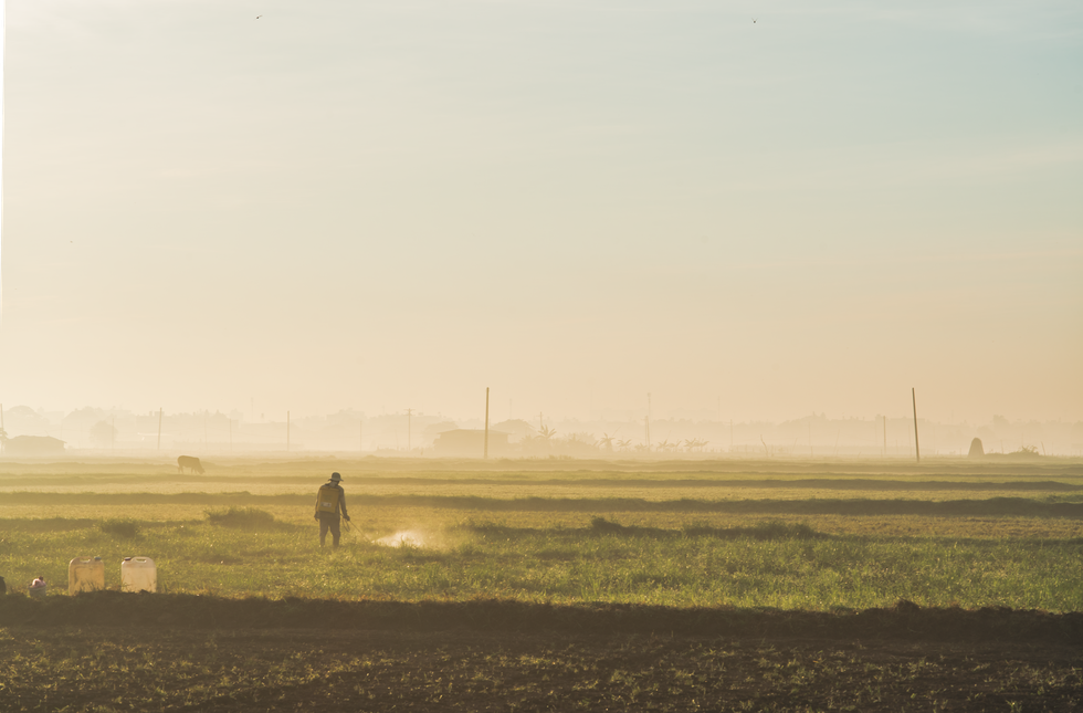 A farmer works under morning lights on a field in Ho Chi Minh City's Hoc Mon District. Photo: Vo Hung Manh