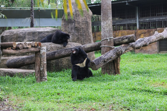 Two Asian black bears are shown in their new habitat in this photo taken at Vinpearl Safari Phu Quoc.