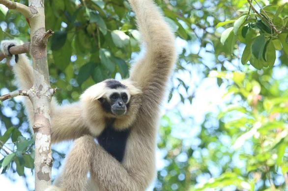 This image shows a primate at Vinpearl Safari Phu Quoc.