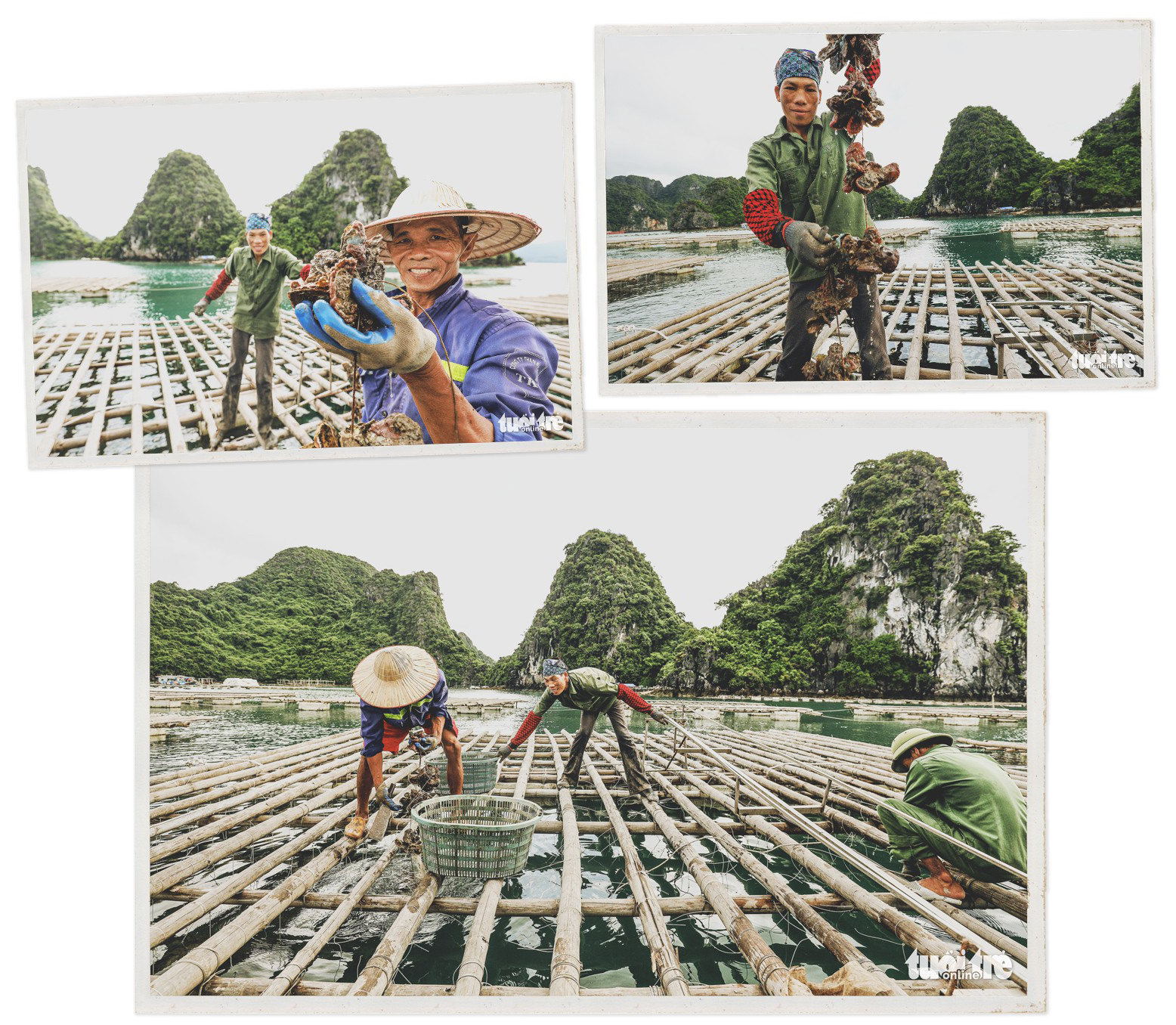 People farm oysters on rafts in Bai Tu Long Bay in Van Don District, Quang Ninh Province, Vietnam.