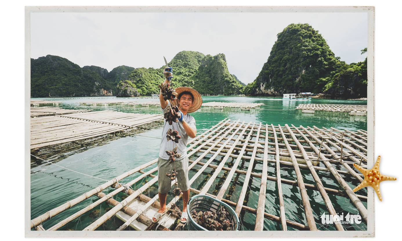 Pham Van Toan, 29, pulls up oysters raised at his farm on Bai Tu Long Bay in Van Don District, Quang Ninh Province, Vietnam. Photo: Nguyen Khanh / Tuoi Tre