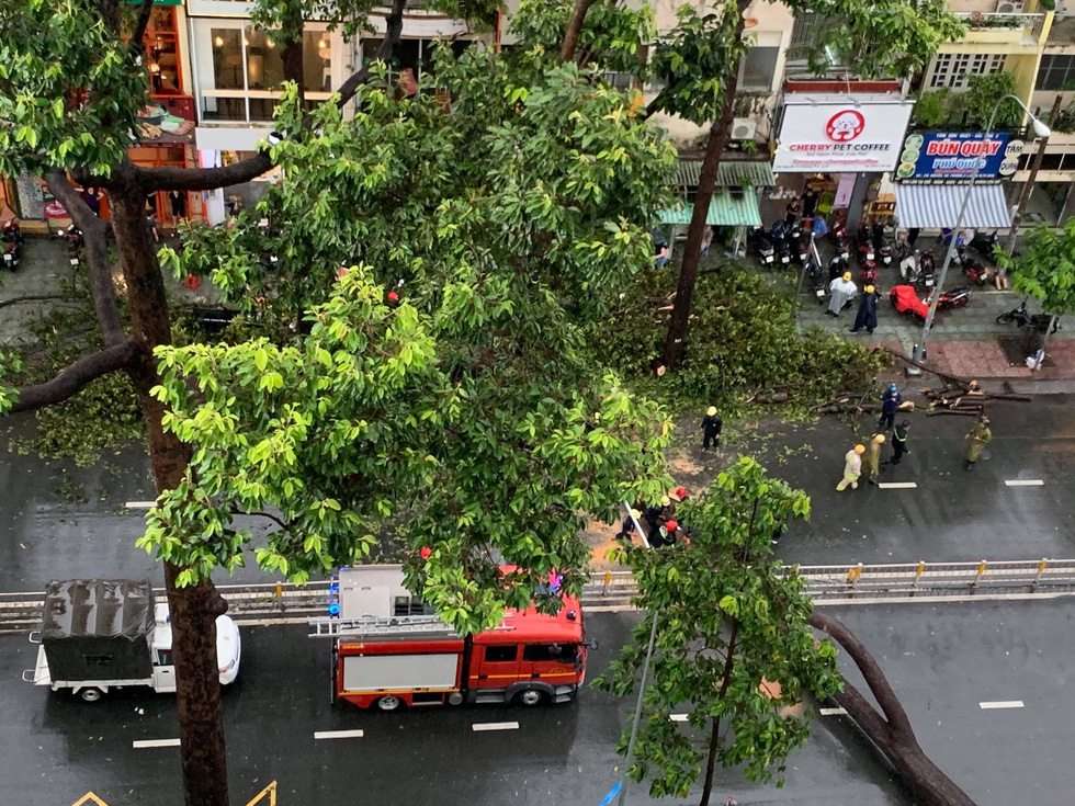A falling tree, which killed a motorcyclist, blocks a section of Nguyen Tri Phuong Street in District 10, Ho Chi Minh City, September 24, 2020. Photo: Huynh Luu Duc Toan / Tuoi Tre