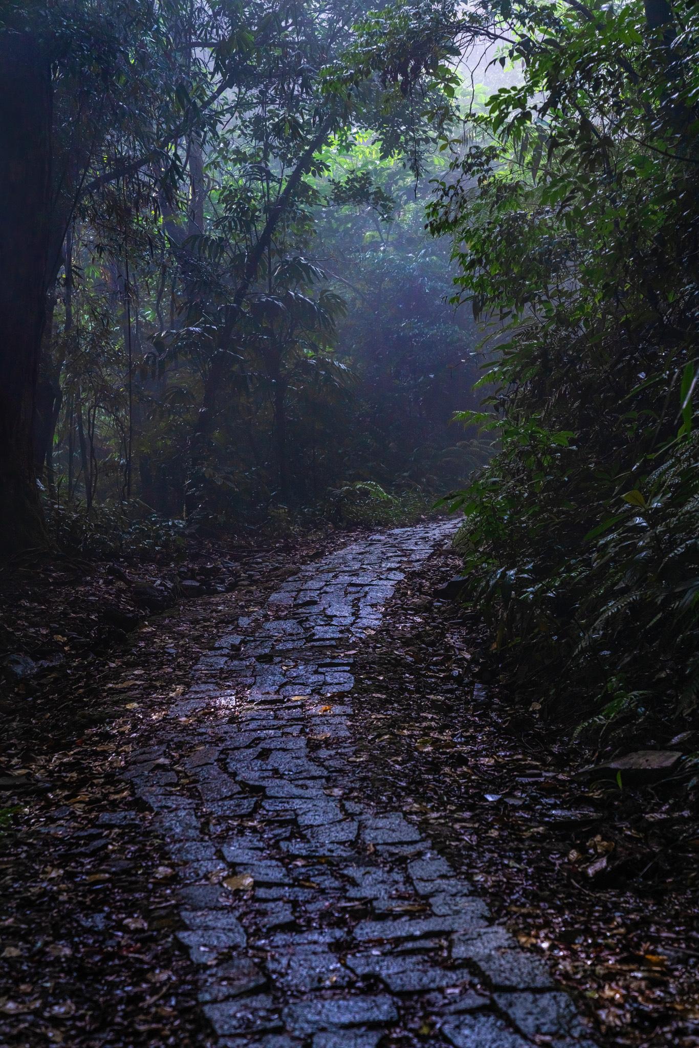 A mountain trail to the Bach Ma peak in Thua Thien-Hue Province, Vietnam. Photo: Tran Luu Anh Tuan / Tuoi Tre