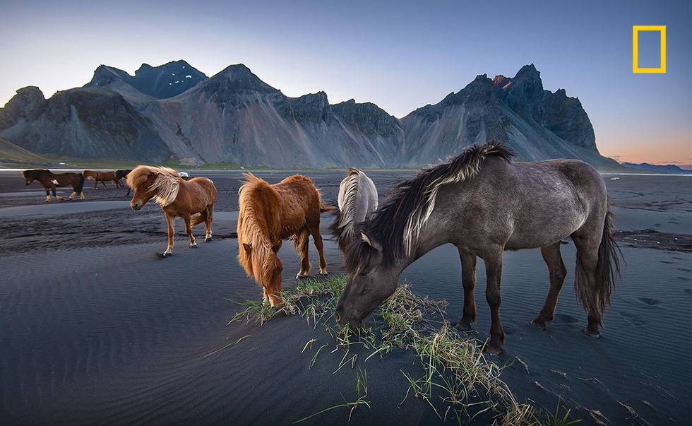 Your Shot photographer Donald Yip's photo capturing wild horses in Iceland.