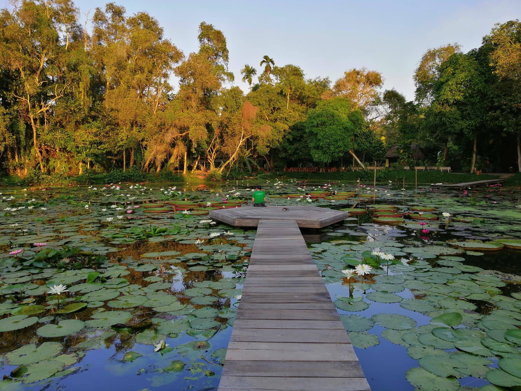 A tourist sits by the water lily pond at the Xeo Quyt Tourism Area in Dong Thap Province, Vietnam. Photo: Ly Quoc Dang / Tuoi Tre