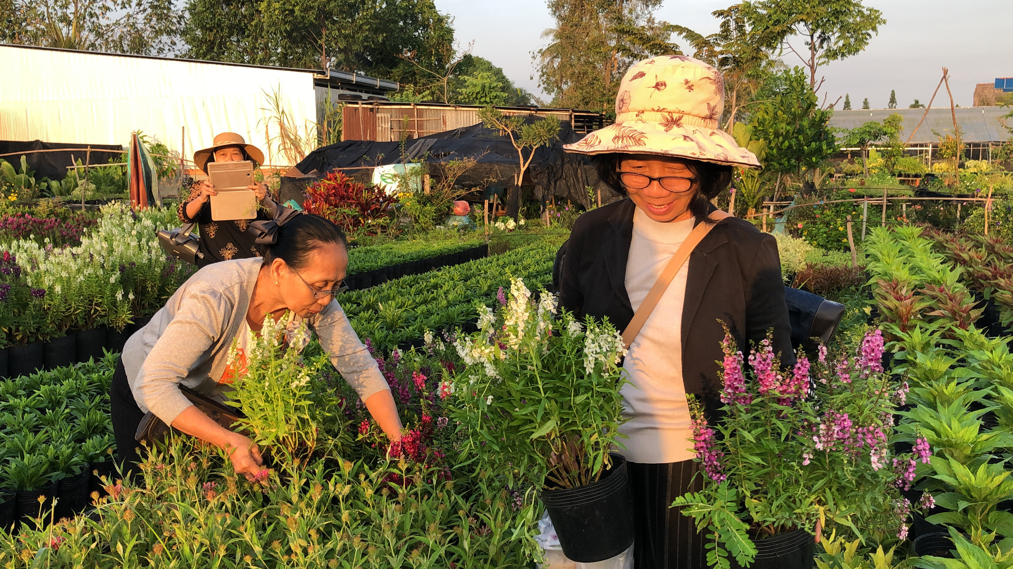 Local people buy flowers at the Sa Dec Flower Village in Dong Thap Province, Vietnam. Photo: Ly Quoc Dang / Tuoi Tre