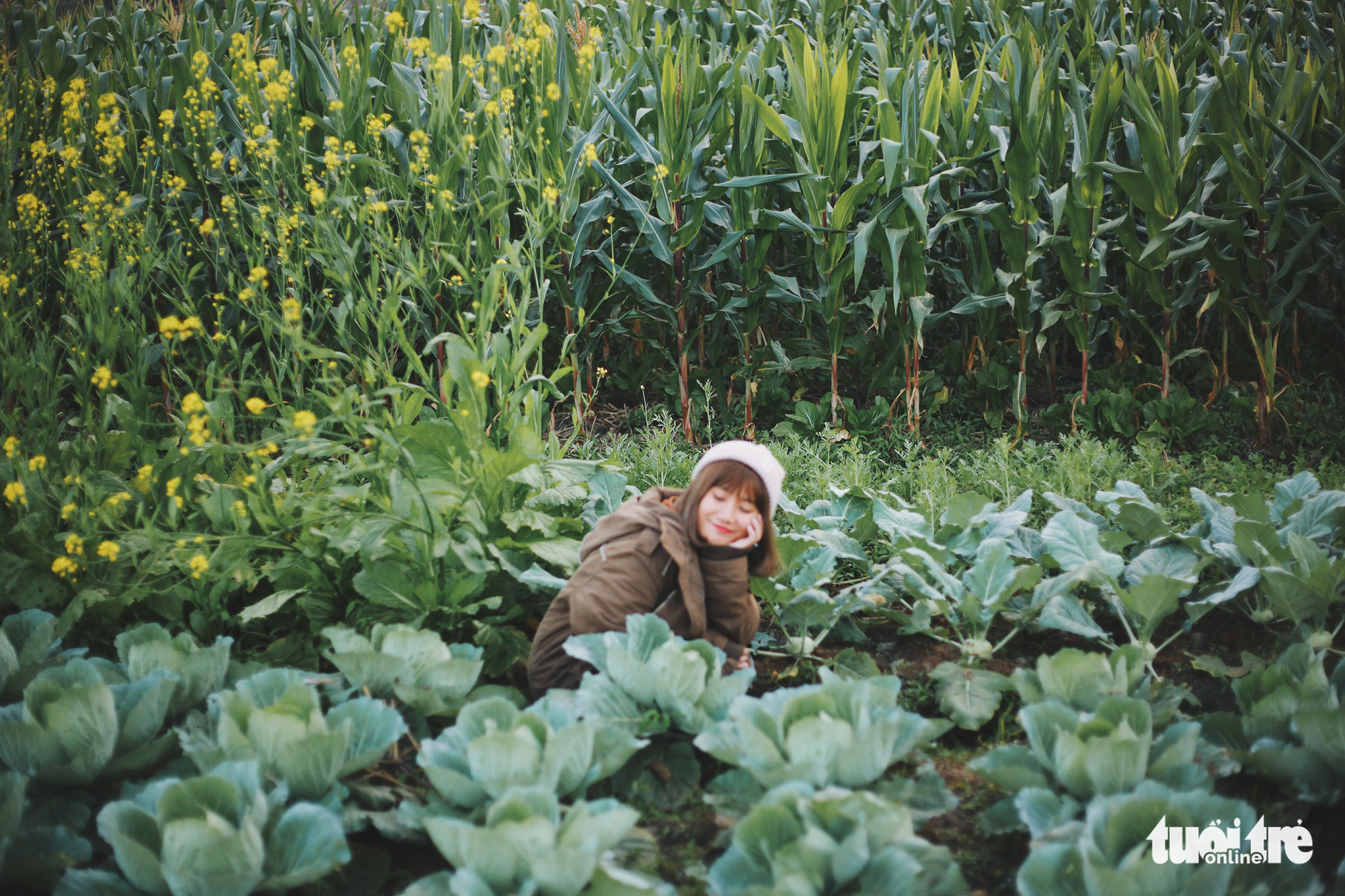 A tourist pose for photos among a vegetable garden owned by local people in Tong Pang Village, Lam Thuong Commune, Luc Yen District, Yen Bai Province, Vietnam. Photo: Cam Tien / Tuoi Tre