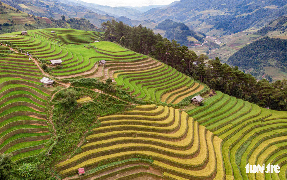 Colorful paddy terraced fields in Mu Cang Chai District in the northern province of Yen Bai in September 2020. Photo: Nam Tran / Tuoi Tre