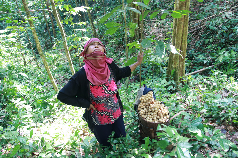 A Lang Thi Giay says that a bumper crop may bring about high profits for local people