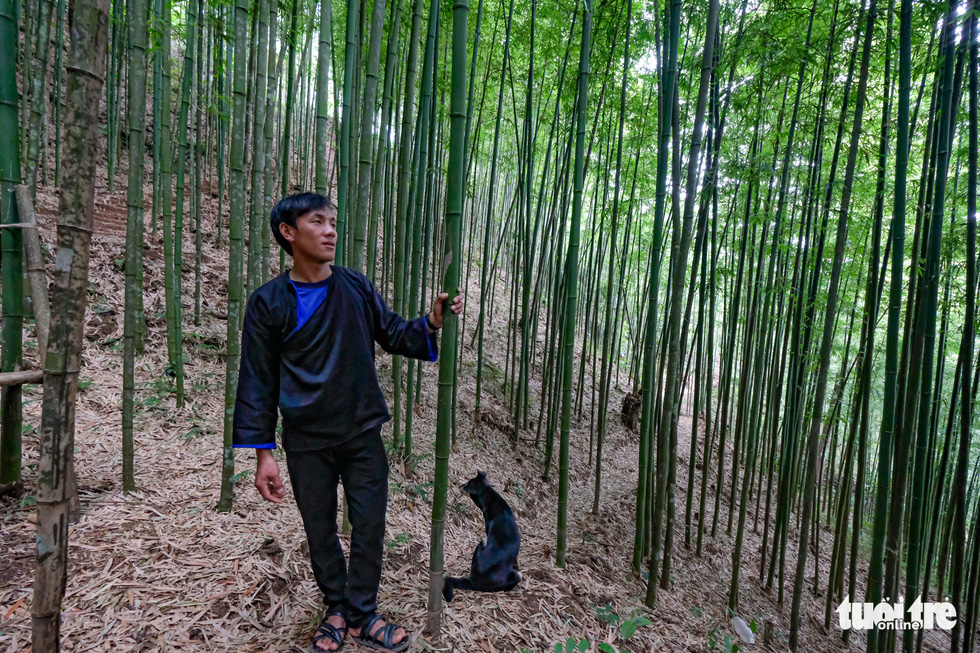 Lu A Tru, 27, the owner of the bamboo forest that based in Na Hang Tua Chu Commune, holds a bamboo tree. He inherited the forest from his grandfather. Photo: Nam Tran - Ha Thanh / Tuoi Tre