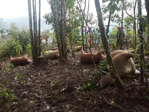 Lightning strikes seven cows to death in Vietnam