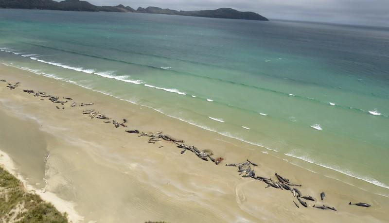 New Zealand rangers, volunteers try to rescue 25 stranded whales