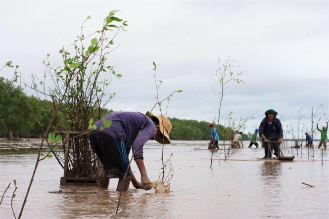 WB commits $51.5mn for Vietnam to reduce CO2 emissions from deforestation, forest degradation