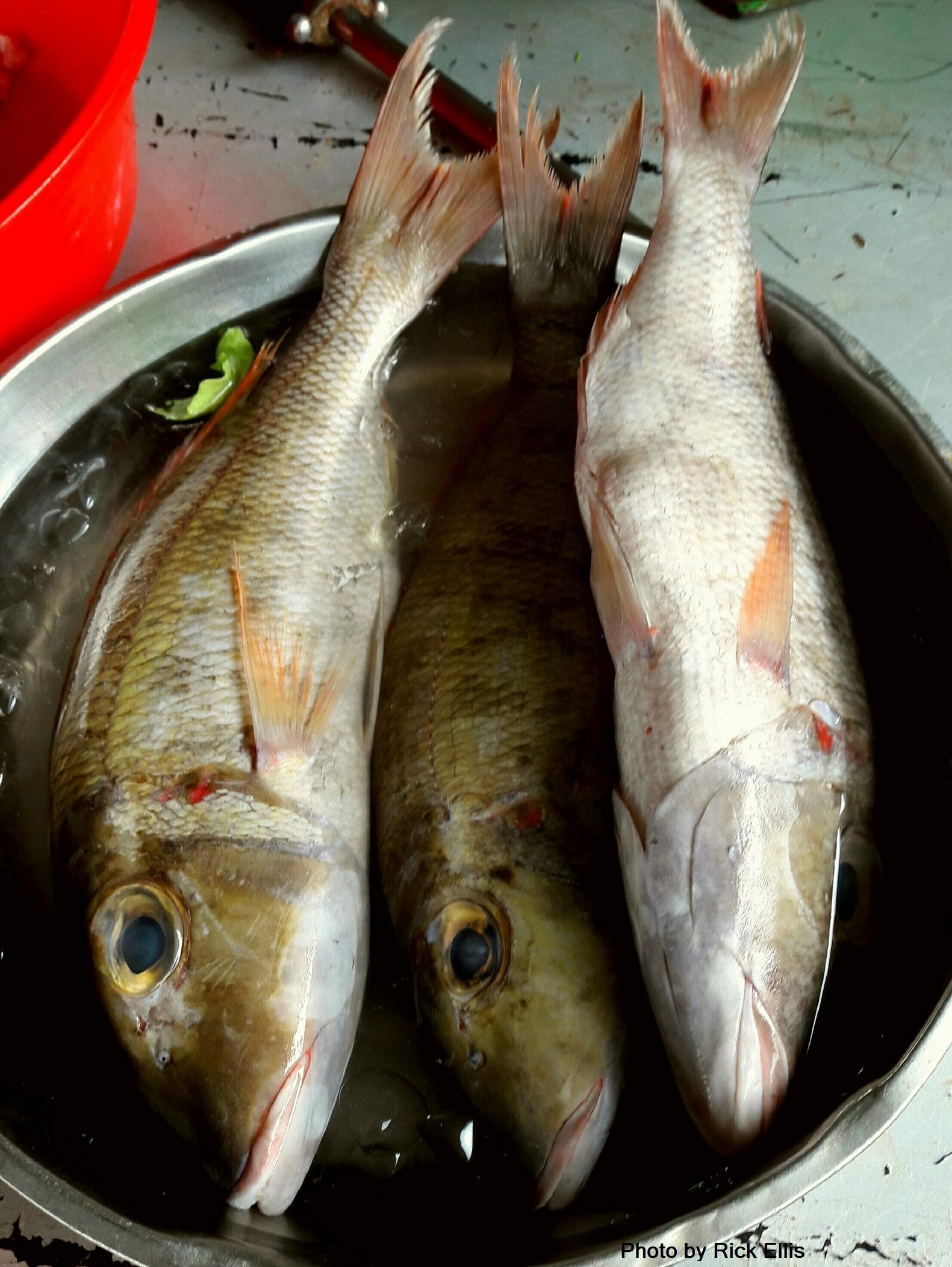 Yummy fish with heads on