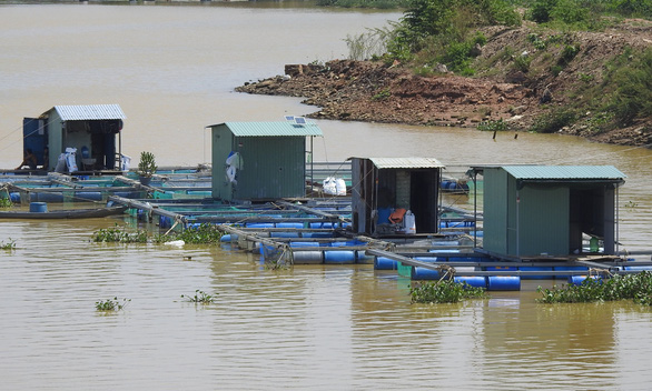 Fish farming houses floating in the sea of Da Nang City are empty as farmers were evacuated to safe places to avoid Storm Molave, October 27, 2020. Photo: V. Hung / Tuoi Tre