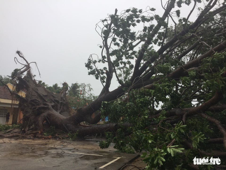 A big tree is uprooted in Phu Yen Province, Vietnam, October 28, 2020. Photo: An Bang / Tuoi Tre
