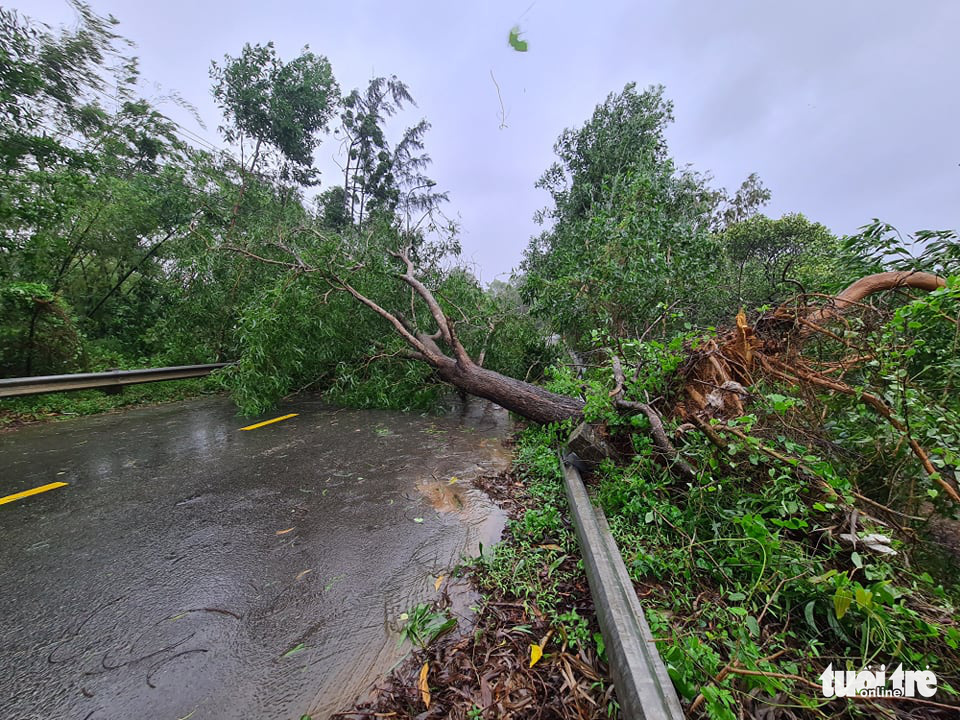 An uprooted tree blocks a road in Quang Nam Province, Vietnam, October 28, 2020. Photo: Ngoc Hien / Tuoi Tre