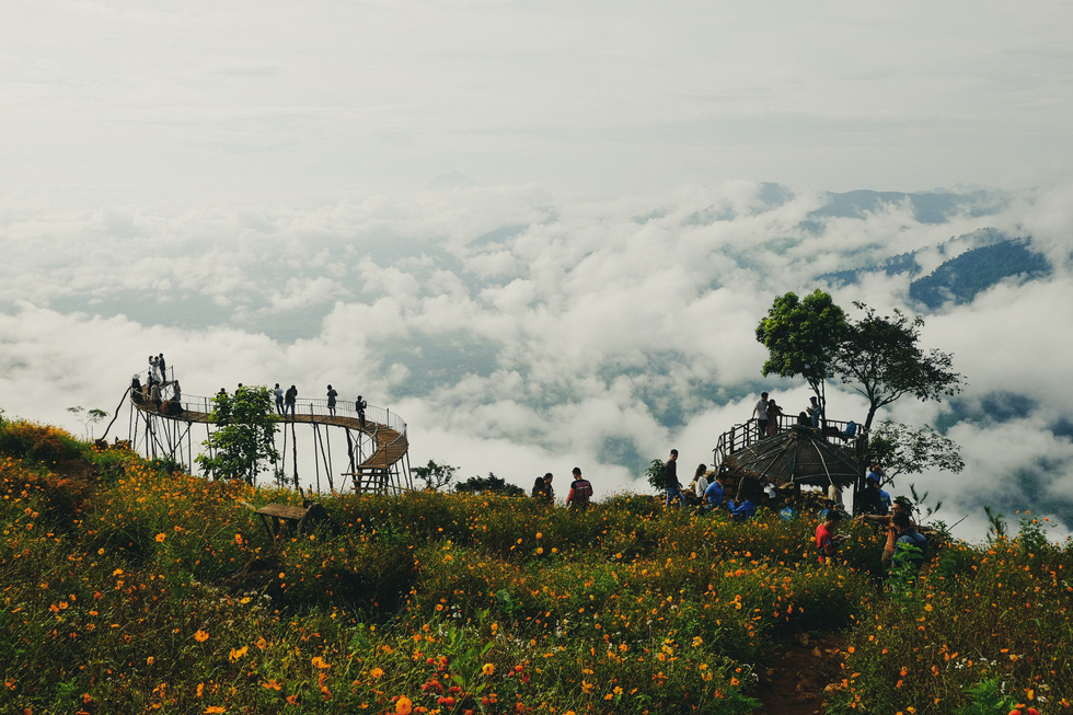 Visitors gather at the cosmos garden, grown by Hmong ethnic people, and the bamboo bridge to take photos at Hang Kia Commune, Mai Chau District, Hoa Binh Province, Vietnam. Photo: Le Hong Thai / Tuoi Tre