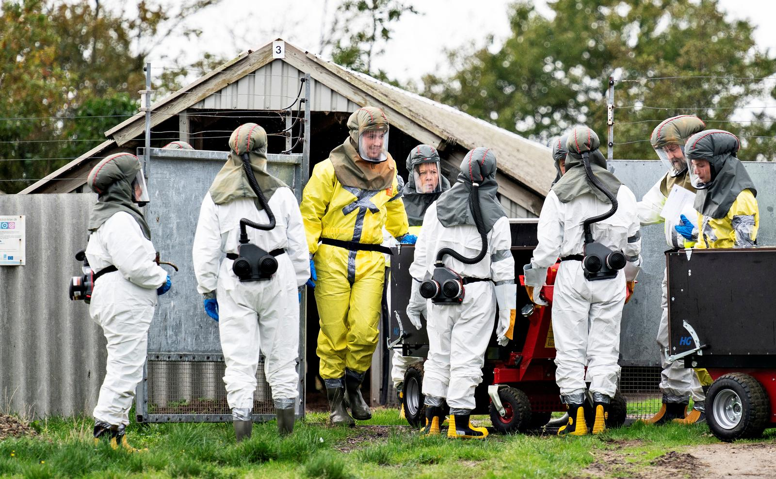 Employees from the Danish Veterinary and Food Administration and the Danish Emergency Management Agency in protective equipment are seen amid the coronavirus disease (COVID-19) outbreak at a mink farm in Gjoel, North Jutland, Denmark October 8, 2020. Photo: Ritzau Scanpix/Henning Bagger via Reuters