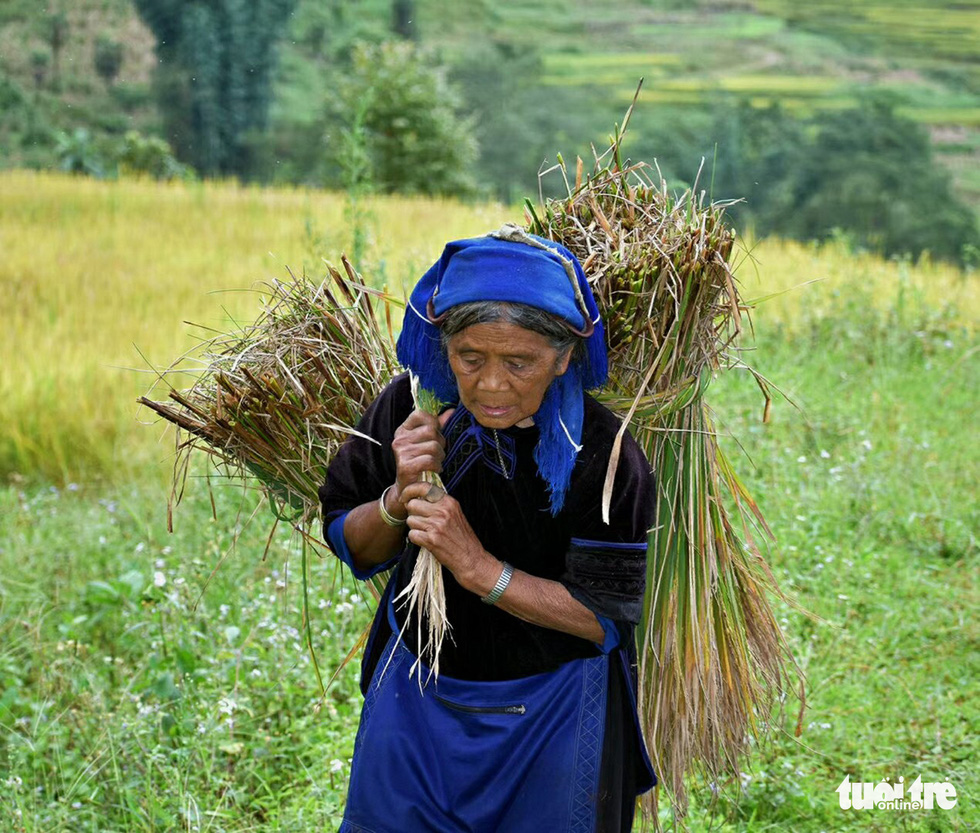 A farmer carries two bundles of rice on her back in this photo taken in Y Ti Commune of Lao Cai Province. Photo: Ly Xa Duy / Tuoi Tre