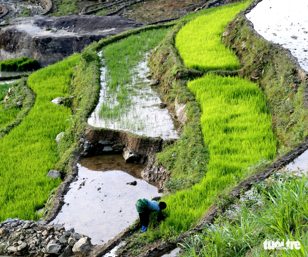 Plots in the terraced fields are reserved to grow rice seedlings in this photo taken in Y Ti Commune of Lao Cai Province. Photo: Van Hai / Tuoi Tre