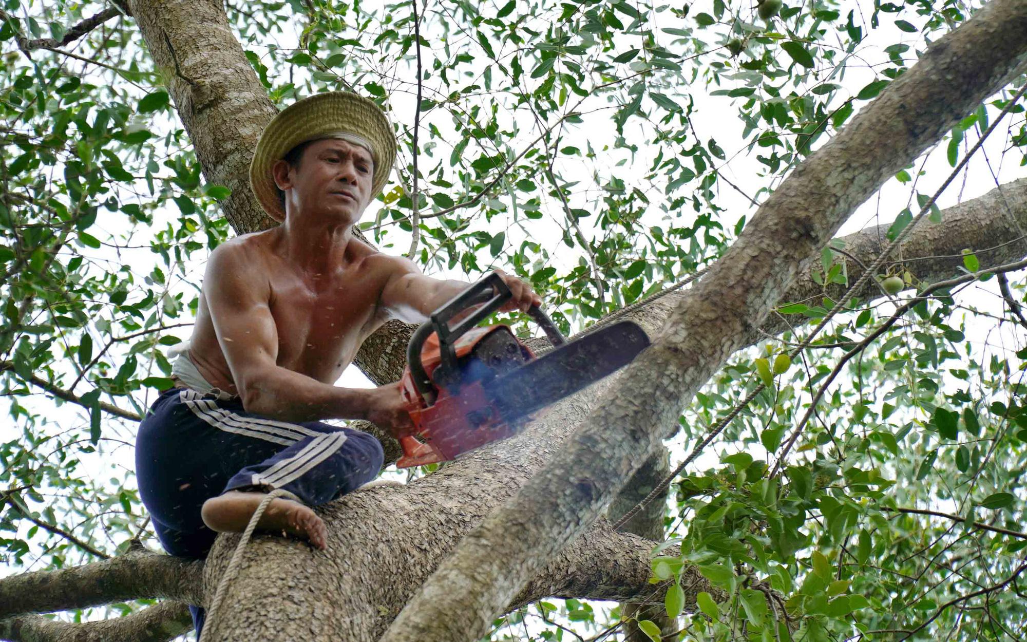 Tree trimmer dubbed 'Monkey King' in Vietnam's Mekong Delta