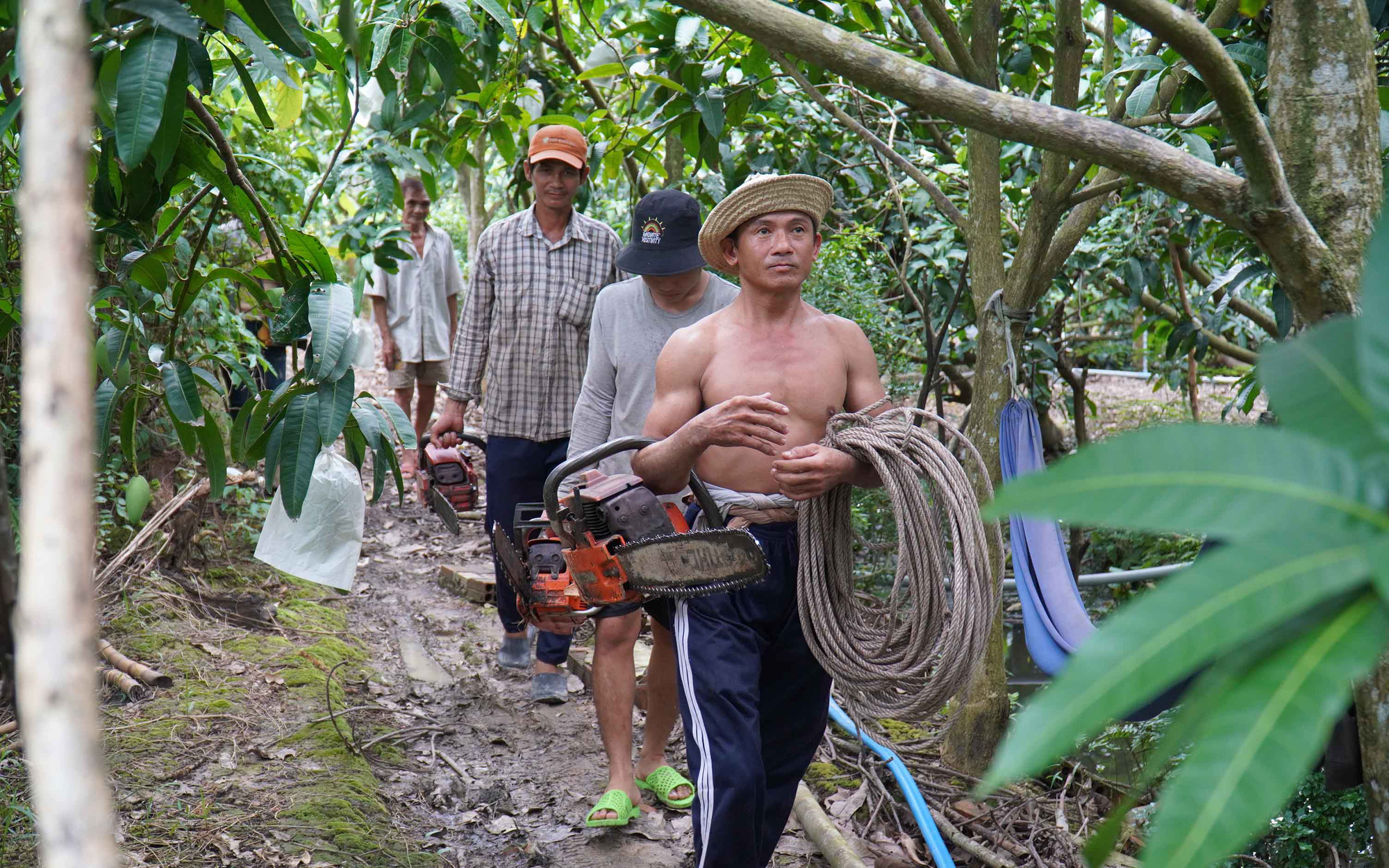 His team also includes two to three other trimmers. Photo: Mau Truong / Tuoi Tre