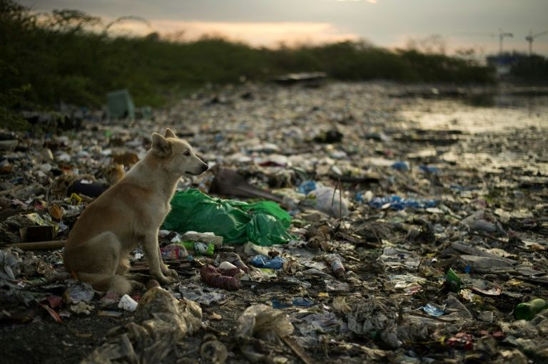 This photo taken on May 19, 2018 shows a dog on a garbage-filled beach on the Freedom island critical habitat and ecotourism area near Manila. Photo: AFP