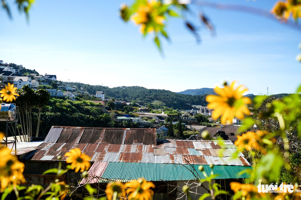 An aesthetic photo of Dalat City in the blooming season of wild sunflowers. Photo: Duc Tho / Tuoi Tre