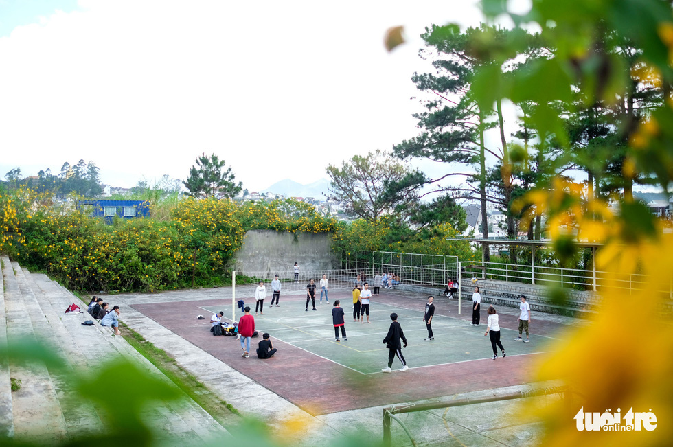 Wild sunflowers surround a playground in Dalat University, Dalat City, Lam Dong Province, Vietnam. Photo: Duc Tho / Tuoi Tre