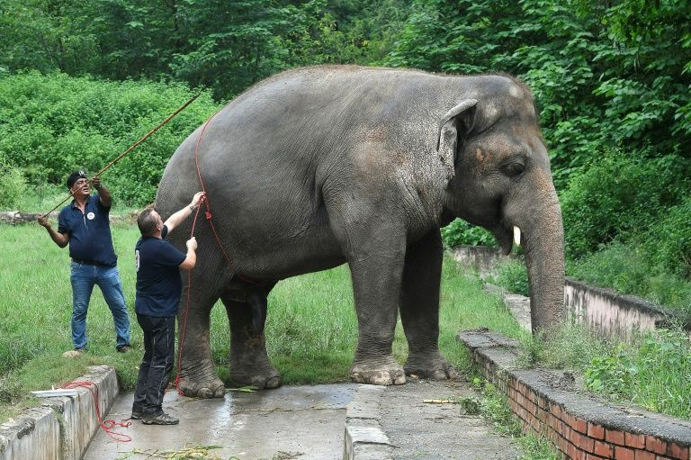 Dubbed the world's loneliest elephant by the press, Kaavan was the only Asian elephant in Pakistan. Photo: AFP