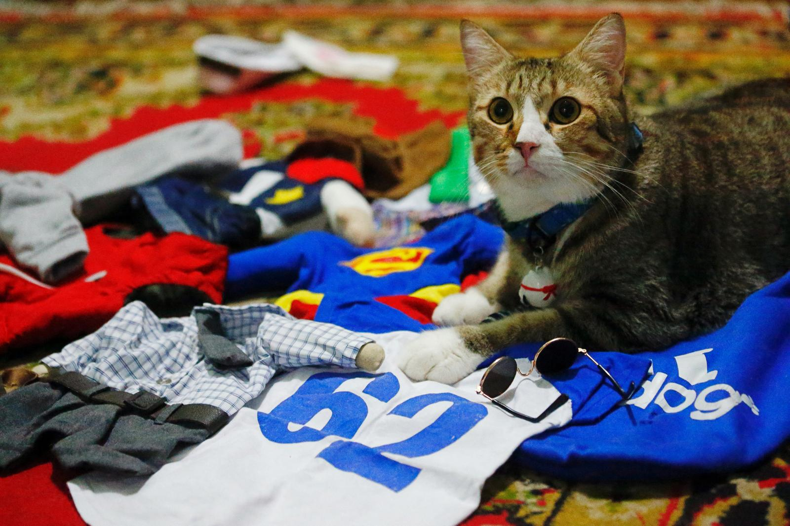 A cat sits among its cosplay costumes in Jakarta, Indonesia, November 29, 2020. Picture taken November 29, 2020. Photo: Reuters