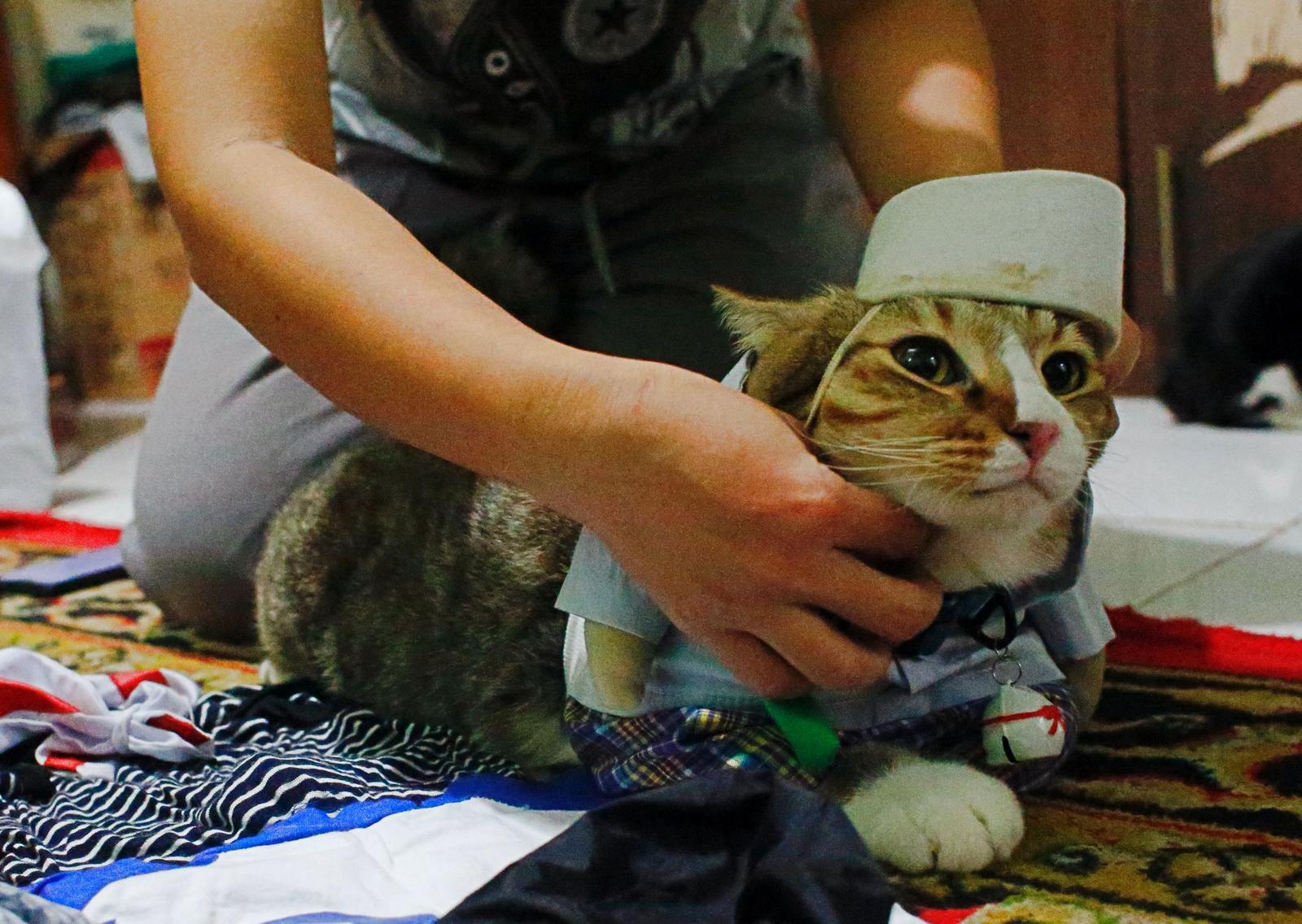 A cat is dressed in a cosplay costume in Jakarta, Indonesia, November 29, 2020. Picture taken November 29, 2020. Photo: Reuters