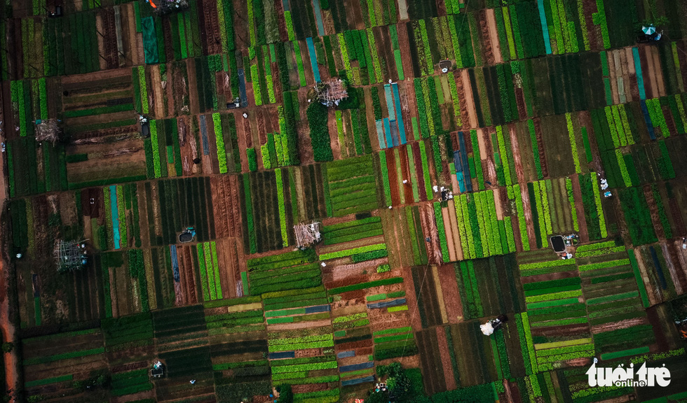 An aerial view of Tra Que Vegetable Village in Quang Nam Province. Photo: Gia Thinh / Tuoi Tre