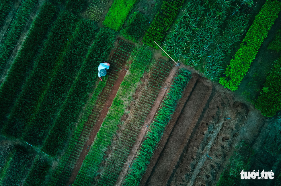 A bird's-eye view of Tra Que Vegetable Village in Quang Nam Province. Photo: Gia Thinh / Tuoi Tre