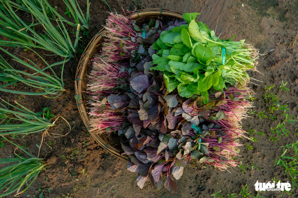A basket of veggies is seen at Tra Que Vegetable Village in Quang Nam Province. Photo: Gia Thinh / Tuoi Tre