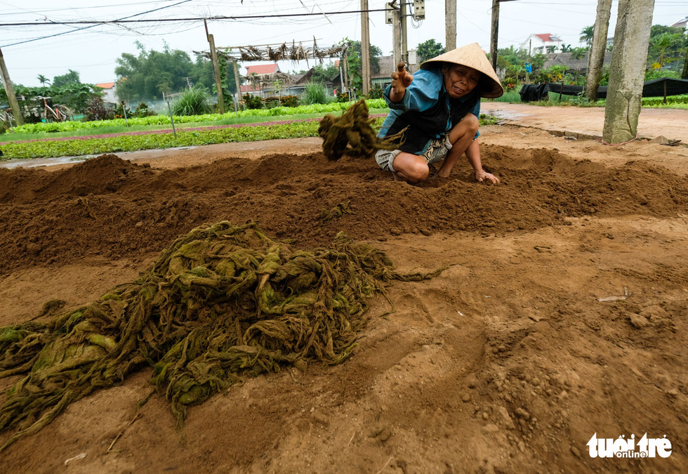 A Tra Que farmer prepares to compost seaweed. Photo: Gia Thinh / Tuoi Tre