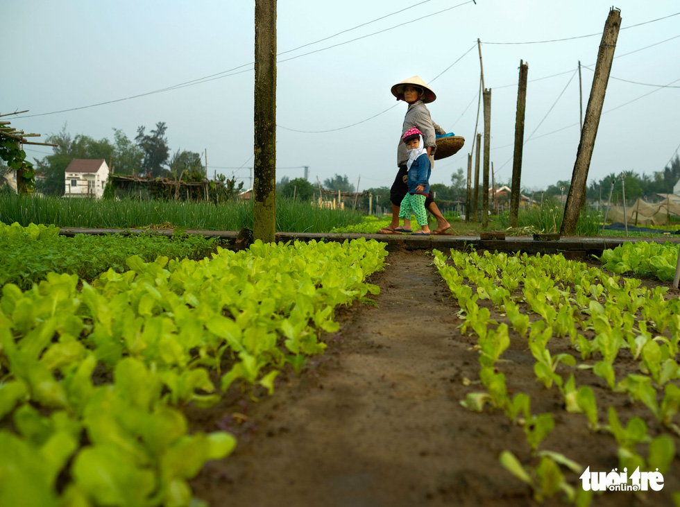 Plots of vegetables are seen at Tra Que Village. Photo: Gia Thinh / Tuoi Tre