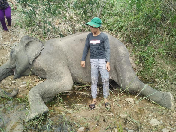 Last tamed elephant in Vietnam's Central Highlands province dies